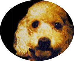 Entstehungsgeschichte der Krebstherapie mit Ozon: Heilung von bösartigem Tumor am Auges eines Hundes