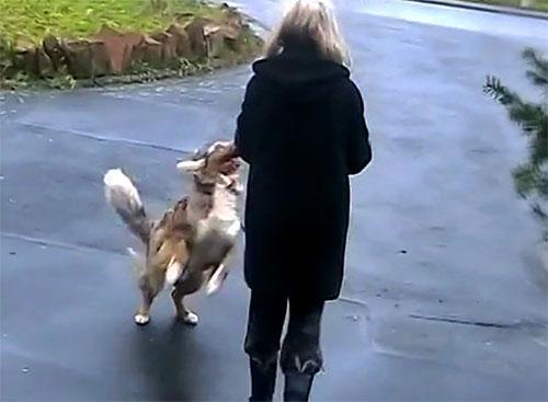 Hund nach der Krebstherapie mit Ozon, freut sich auf Besitzer.