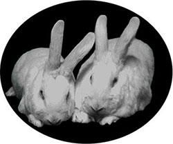 Entstehungsgeschichte der Krebstherapie mit Ozon: Kaninchen geheilt vom Krebs und seinen Tumoren