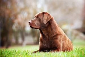 hunde-krebs-patienten