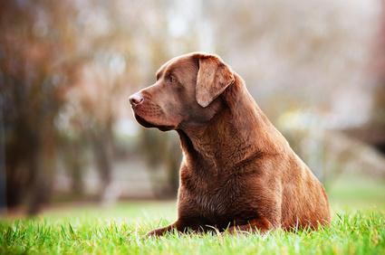 Krebs beim Hund: unsere Patienten