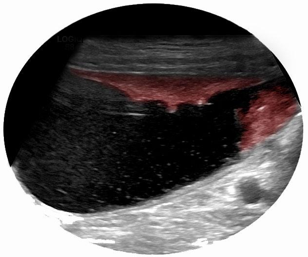 schaeferhund-blasenkrebs-tumor-blase-beim-hund-vor-krebstherapie-02