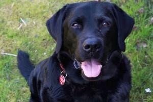 Osteosarkom beim Hund: Maligner Spindelzelltumor im hinteren Nasenraum