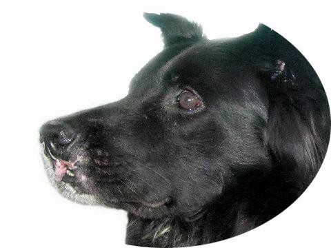 Bösartiger Spindelzelltumor beim Hund an der Lefze nach der Operation